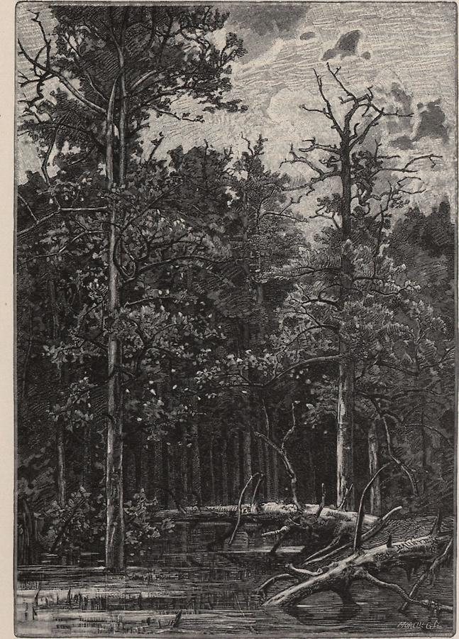 Illustration Urwald bei Csurgo
