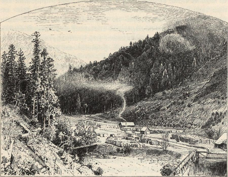 Illustration Holzverkohlung