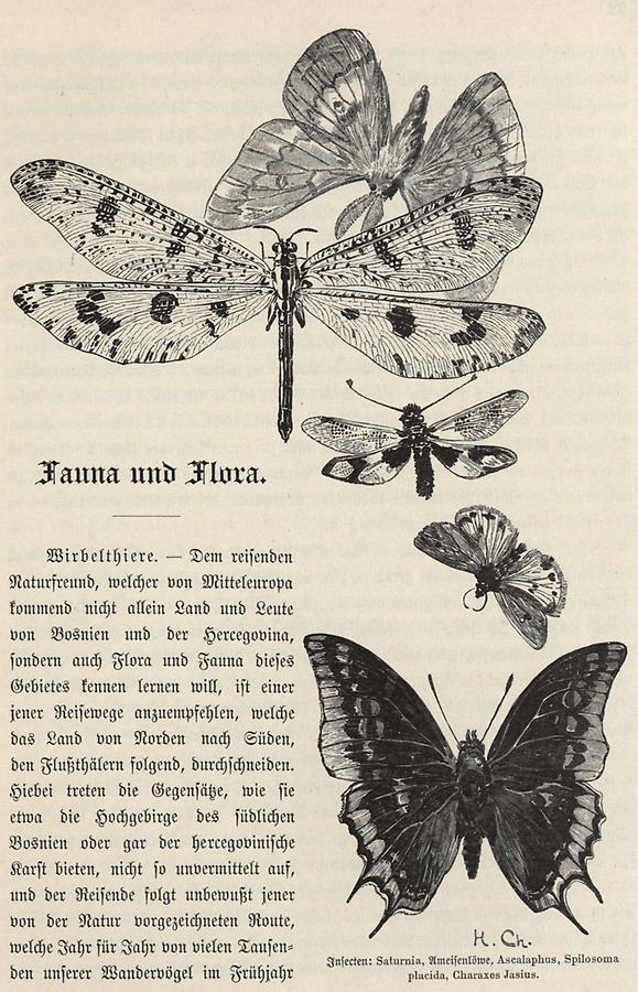 Illustration Insekten (1)