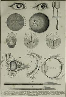 Auge (Tafel I)