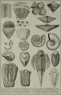 Devonische Formation