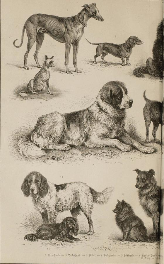 Illustration Hund (Tafel I)