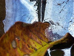 Blätter II