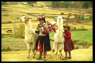 Cuzco Indios