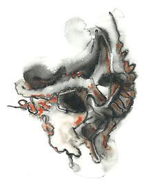 Kopf (1)
