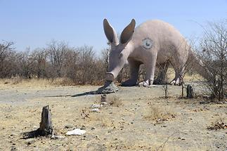 Planet Baobab (1)
