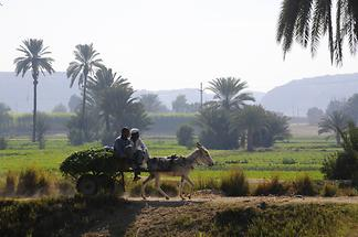 Nile Delta near Dendera