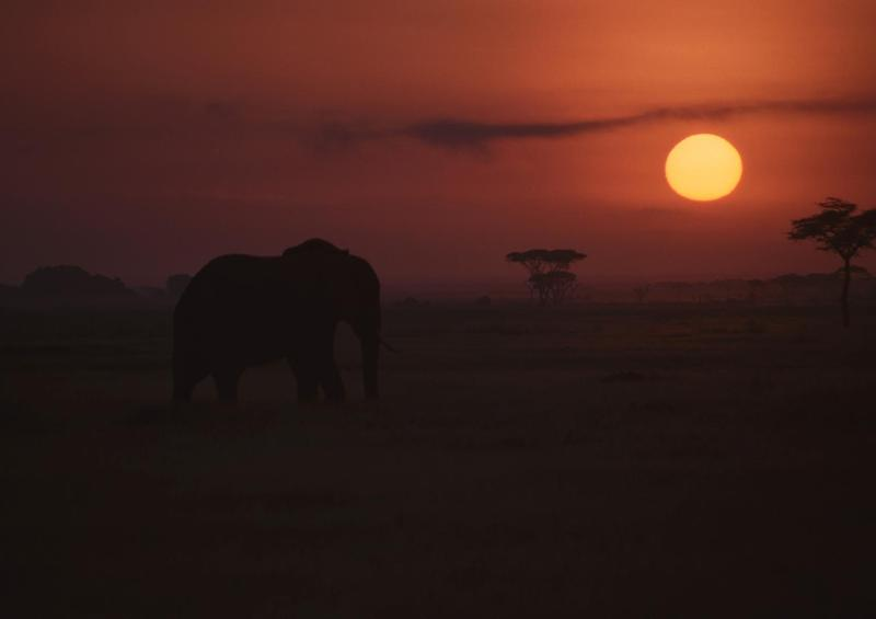 Sunset, Amboseli National Park