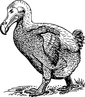 Dodo, Foto source: PixaBay