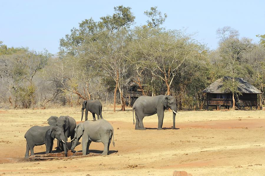 Elephants Ivory Lodge