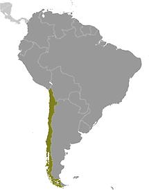 Chile in South America
