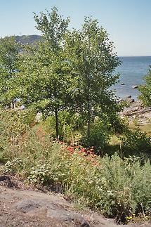 Lago Llanquihue (2)