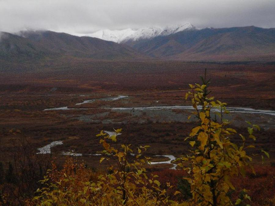 Denali Park, Photo: H. Maurer, 2005