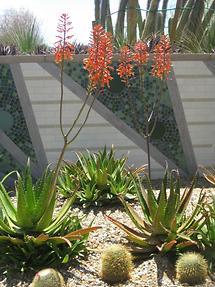 Phoenix Desert Botanical Garden (3)