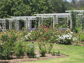 LA MA San Marino The Huntington Rose Garden (2)