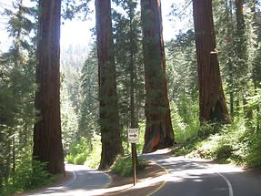 Sequoia Kings Canyon NP (1)