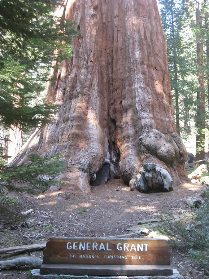 Sequoia Kings Canyon National Park General Grant