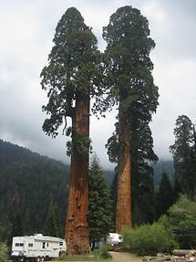 Sequoia NF Sequoia Crest