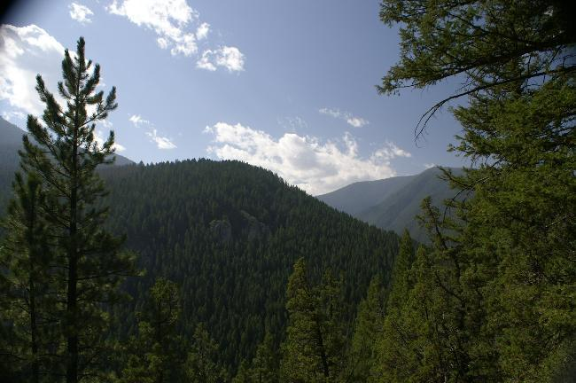 Gallatin National Forest