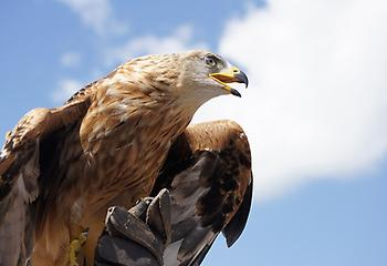 Golden Eagle, Foto source: PixaBay