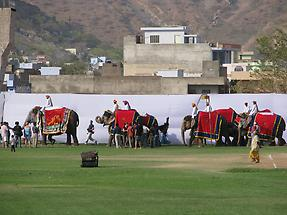 Elephant Festival (1)