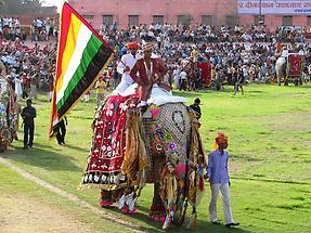 Elephant Festival (3)