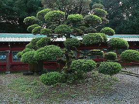 Ueno Toshogu Shrine (5)