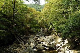 Kaya National Park