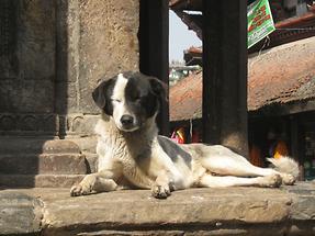 Kathmandu Durbar Square (3)