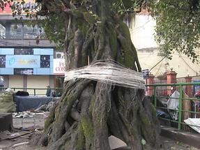 Kathmandu New Road Sanctuary