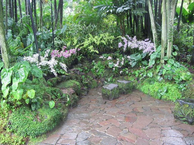 National Orchid Garden (1)