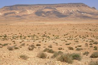 Landscape near Palmyra