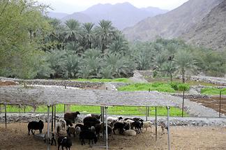 Wadi Hayl Fujairah (2)