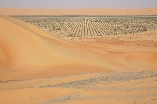 Liwa Oasis (1)
