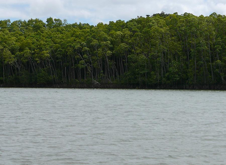 Daintree river, Photo: H. Maurer, 2007
