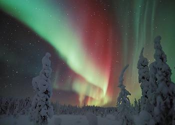 Northern Lights in Snowy Forest in Finland