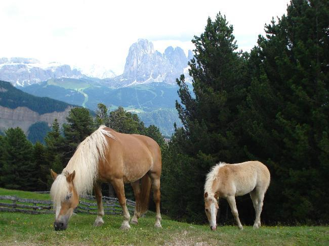 Foal and mare in the Dolomites