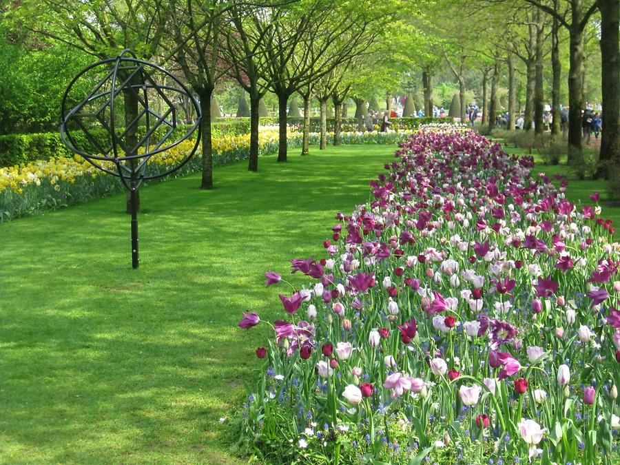 flower beds with tulips in yellow and pink