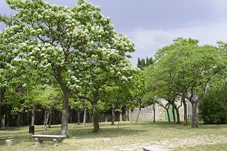 Burgos - Miraflores (3)