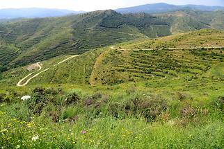 Landscape near Enciso (1)