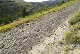 Saurian Tracks Valdecevillo (1)