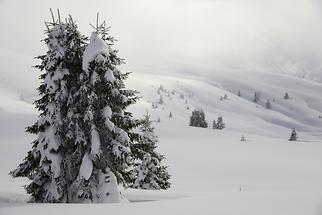 Forest Alta Badia