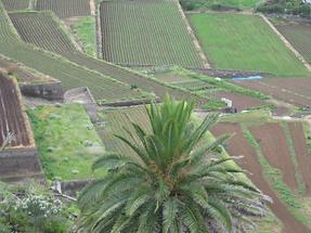 La Orotava - Mirador Humboldt - Blick gegen Puerto Cruz