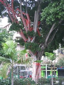 Santa Cruz deTenerife - Plaza de Weyler