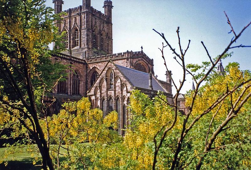 Laburnum trees around Chester Cathedral