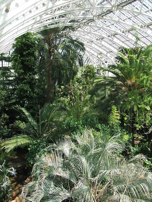 The Palm House, Royal Botanic Gardens (2)
