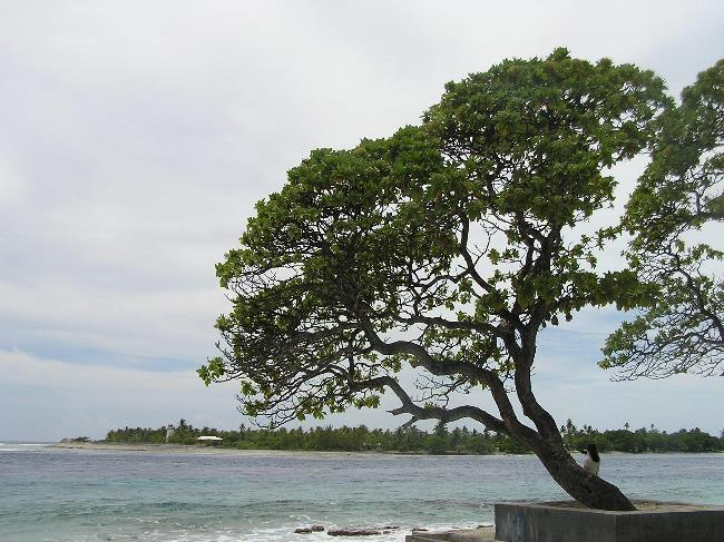 Tree on Rangiroa