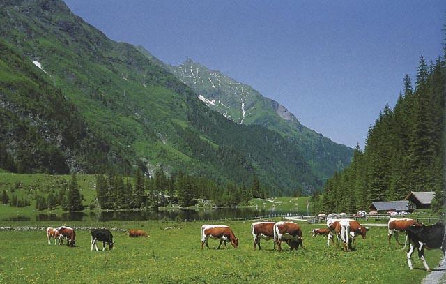 Hintersee österreich