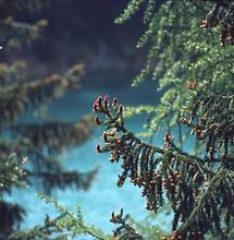 Grüner See 2