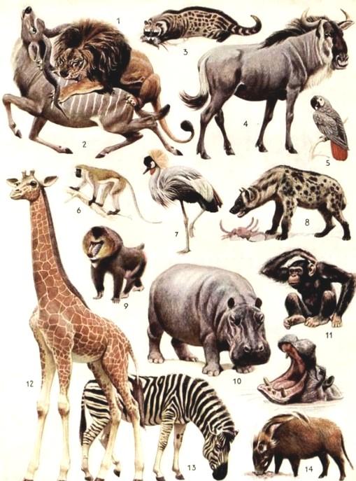 Afrika 7 tiere afrika 8 tiere afrika tiere afrika 10